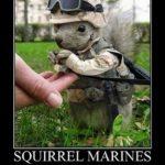 Squirrel Marines
