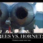 Bees Vs. Hornets