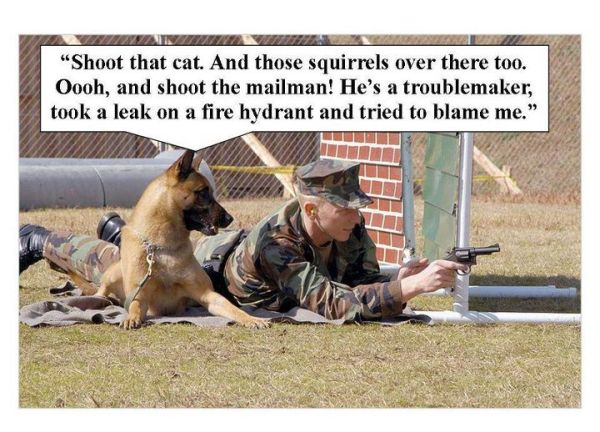 Military humor funny joke dog revenge army