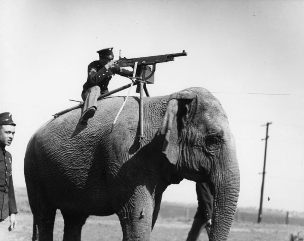 Assault Elephant - Military humor