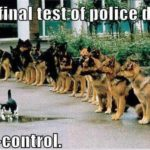 The Final Test For Police Dogs