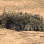 Amazing Camouflage
