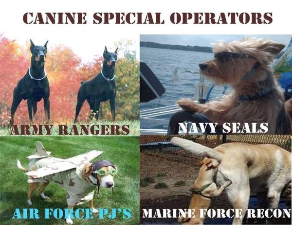 Canine Special Operators - Military humor