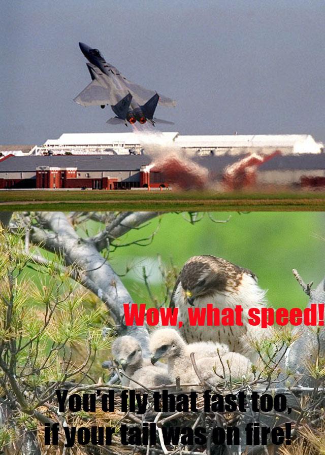Look At Him Go! - Military humor