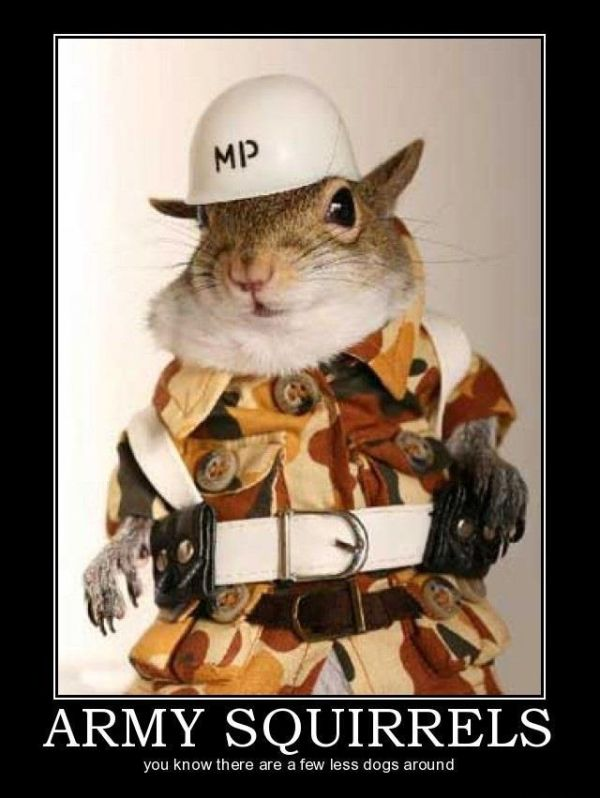 Army Squirrels - Military humor