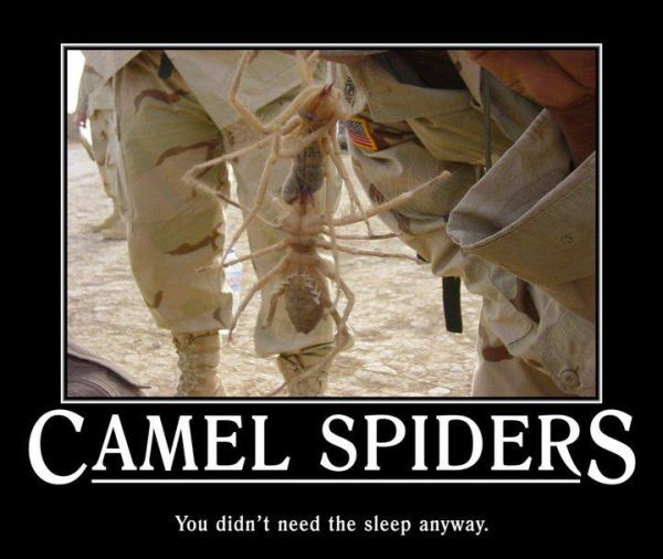 Camel Spiders - Military humor