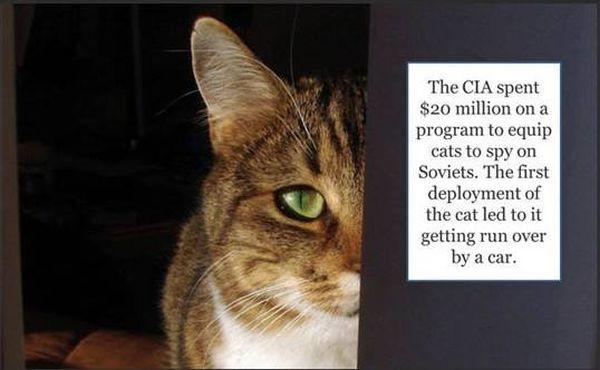 Spy Cat - Military humor