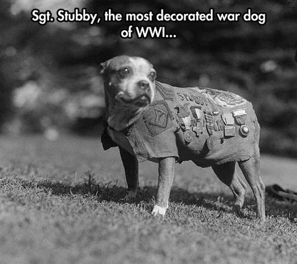 Sergeant Stubby - Military humor